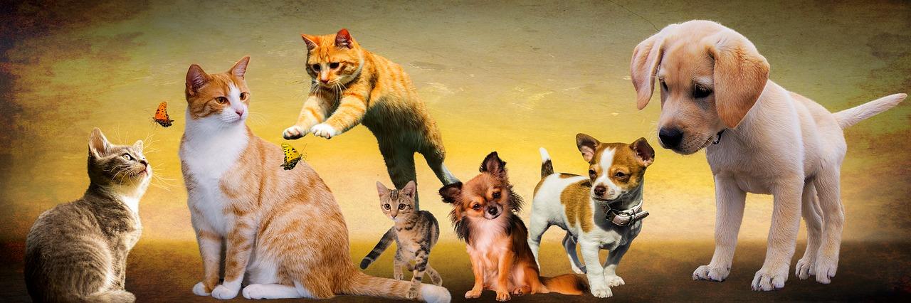 Koirat ja kissat ottivat CBD-öljyä eläimille