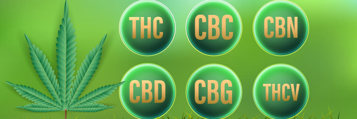Kannabinoidit - yleiskatsaus - CBD, THC, CBC, CBN, CBG, THCV